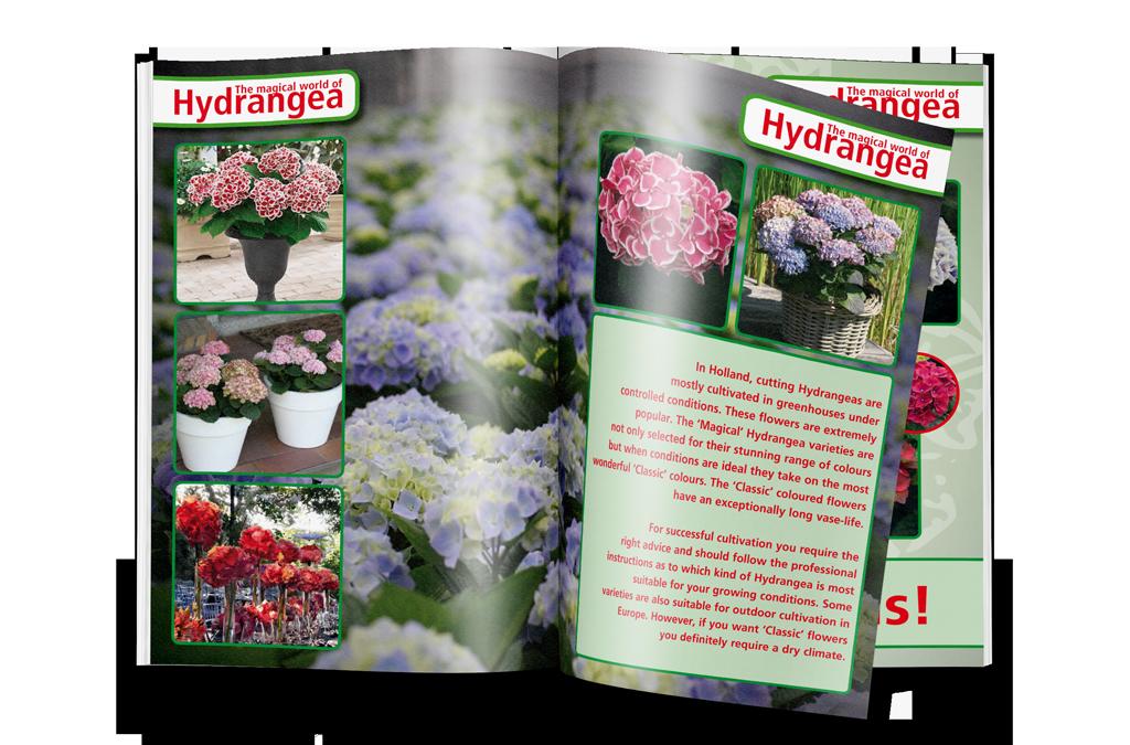 brochures Kolster